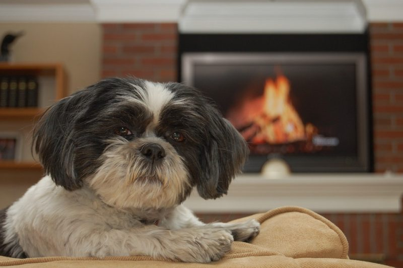 tips to protect your kids and pets from fire injuries